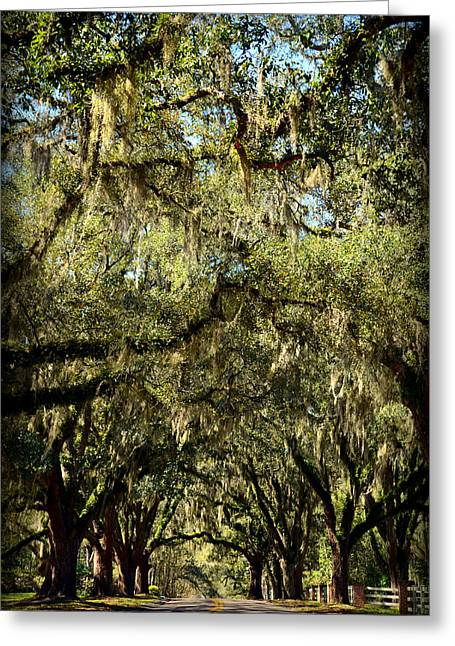 Towering Canopy Greeting Card by Carla Parris