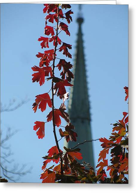 Towering Leaves Greeting Card by Alfred Ng