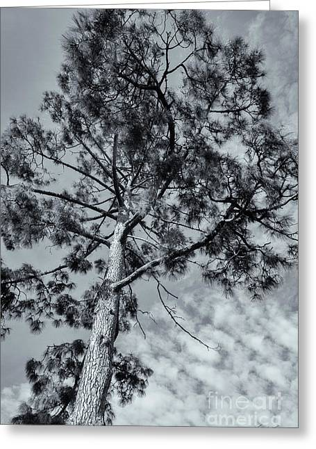 Greeting Card featuring the photograph Towering by Linda Lees