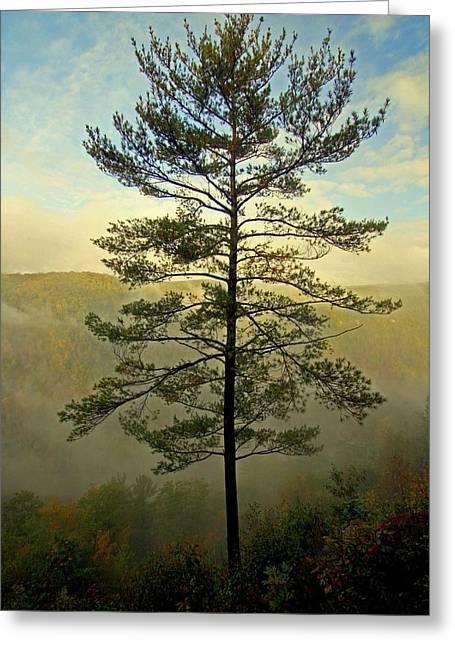 Towering Pine Greeting Card