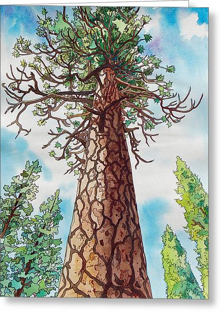 Towering Ponderosa Pine Greeting Card by Terry Holliday