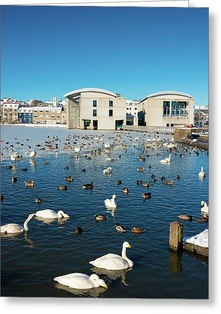 Greeting Card featuring the photograph Town Hall And Swans In Reykjavik Iceland by Matthias Hauser