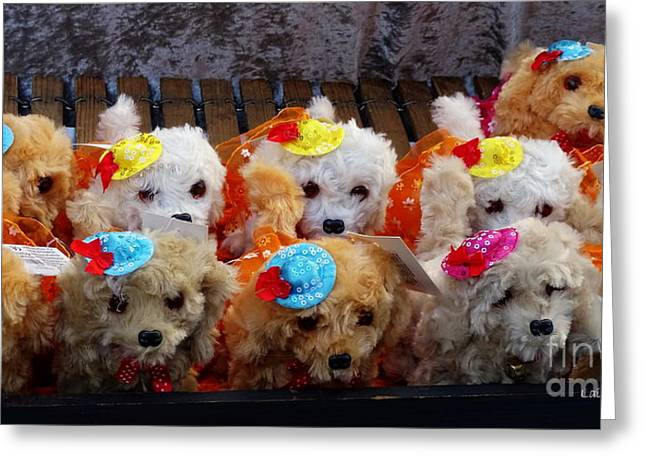 Toy Puppy Line-up Greeting Card