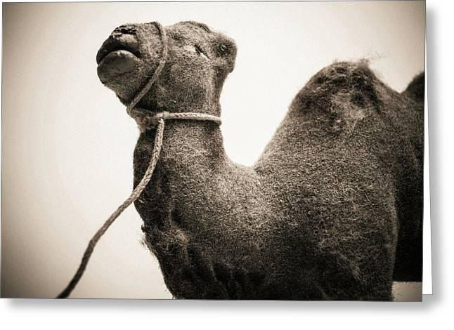 Toy Representing A Camel. Greeting Card by Bernard Jaubert