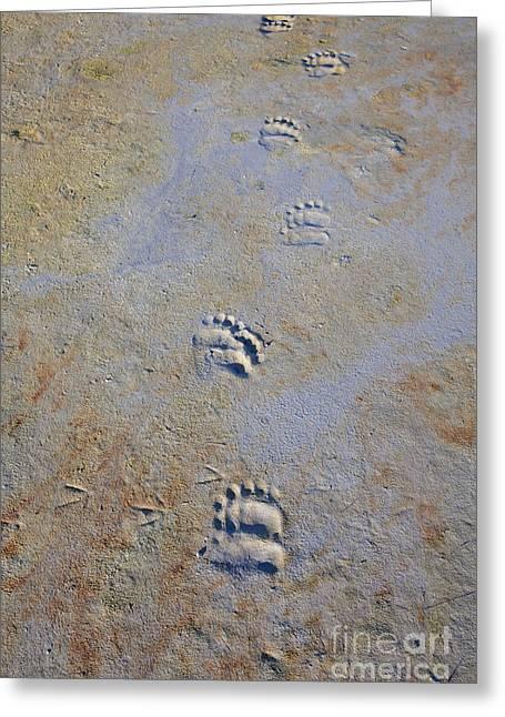Tracks On A Beach Greeting Card