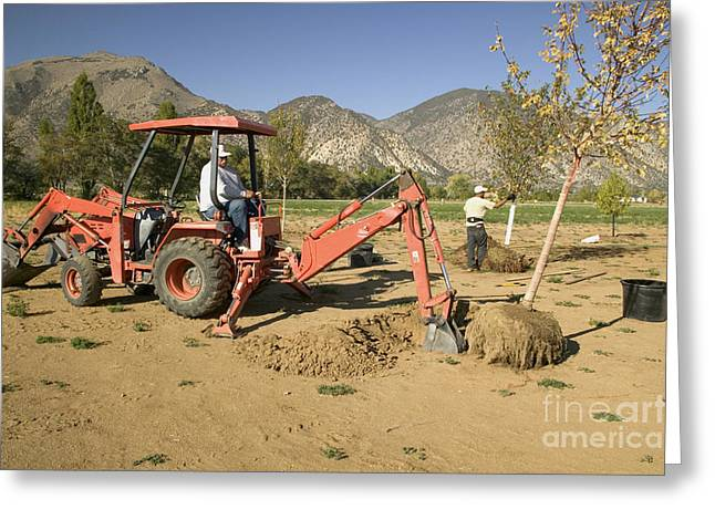 Tractor Planting Trees Greeting Card by Inga Spence