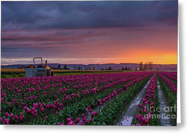 Greeting Card featuring the photograph Tractor Waits For Morning by Mike Reid