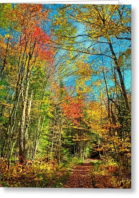 Trail Along The Moose River Greeting Card