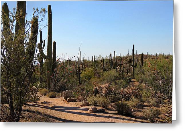 Trail Shadows Greeting Card