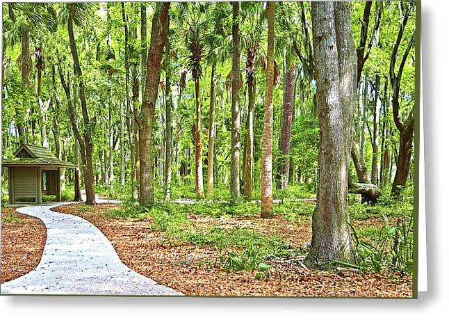 Trail Through National Forest Greeting Card