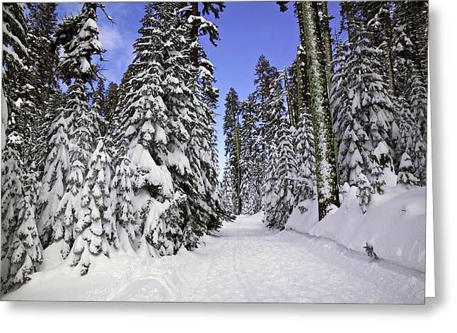 Trail Through Trees Greeting Card