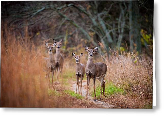 Trail Watchers Greeting Card