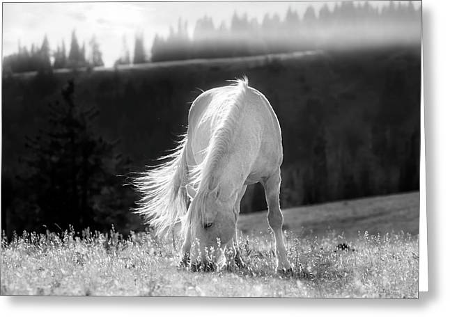 Greeting Card featuring the photograph Tranquil Black And White 3 by Leland D Howard