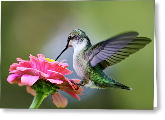 Tranquil Joy Hummingbird Square Greeting Card by Christina Rollo