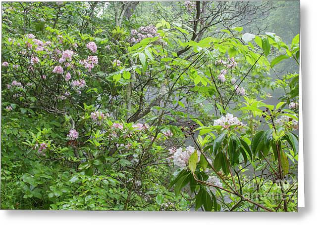 Greeting Card featuring the photograph Tranquil Nature by Chris Scroggins