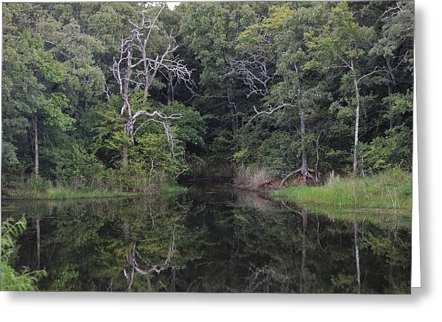 Greeting Card featuring the photograph Tranquility by Sheila Brown