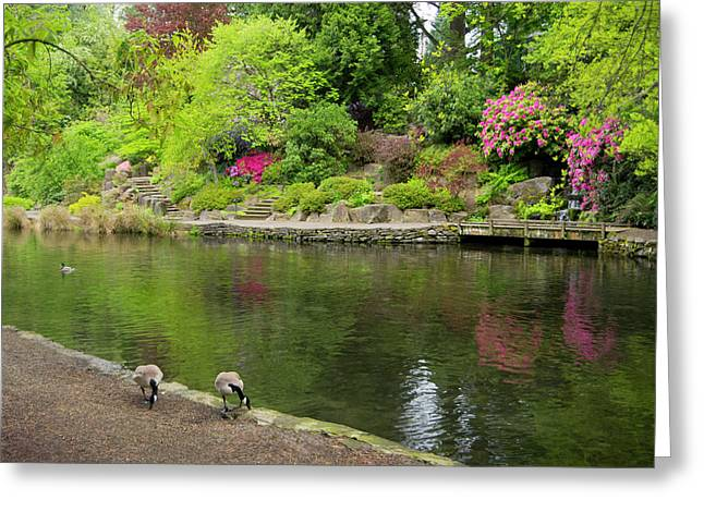 Tranquility  Greeting Card by Steven Clark