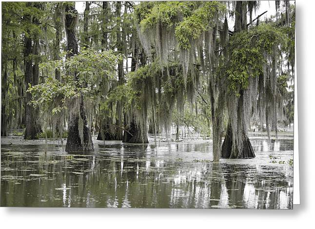 Tranquility Swamp Greeting Card by Betsy Knapp