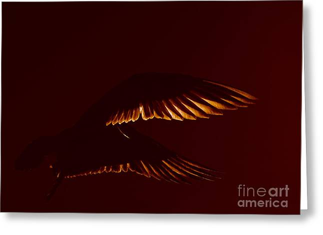 Transiently Translucent Greeting Card