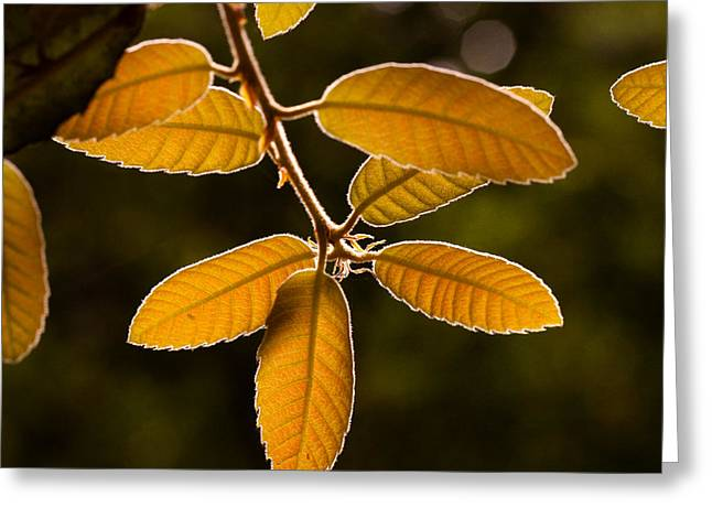 Translucent Leaves Greeting Card