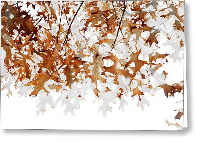 Translucent Greeting Card by The Forests Edge Photography - Diane Sandoval