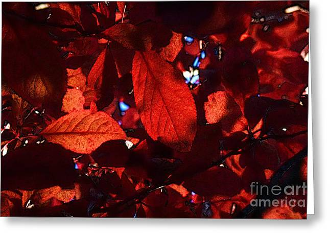 Transparence 12 Greeting Card by Jean Bernard Roussilhe