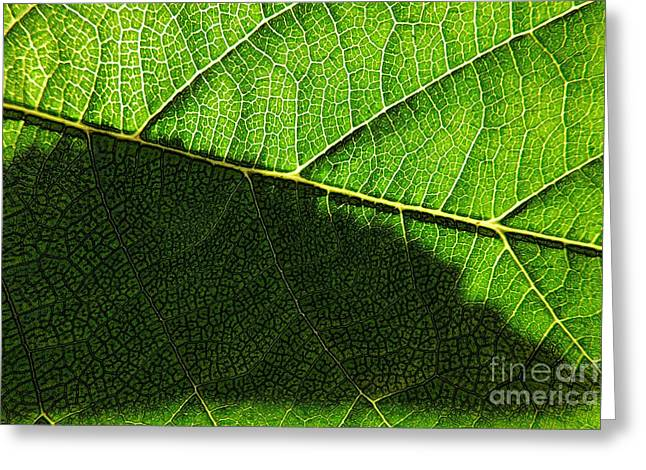 Transparence 20 Greeting Card by Jean Bernard Roussilhe