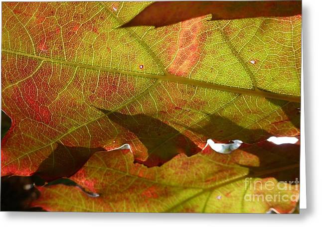 Transparence 4 Greeting Card by Jean Bernard Roussilhe