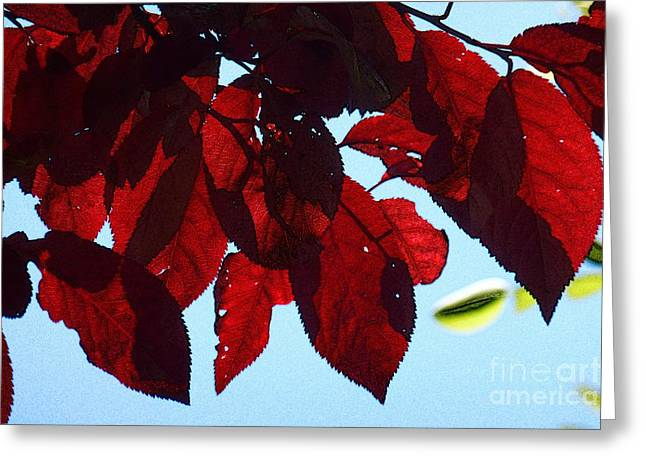 Transparence 8 Greeting Card by Jean Bernard Roussilhe