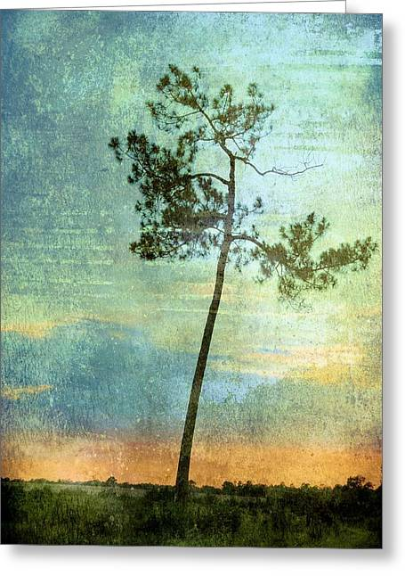 Transpiration Greeting Card by Jan Amiss Photography