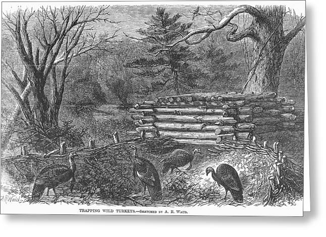 1868 Greeting Cards - Trapping Wild Turkeys, 1868 Greeting Card by Granger