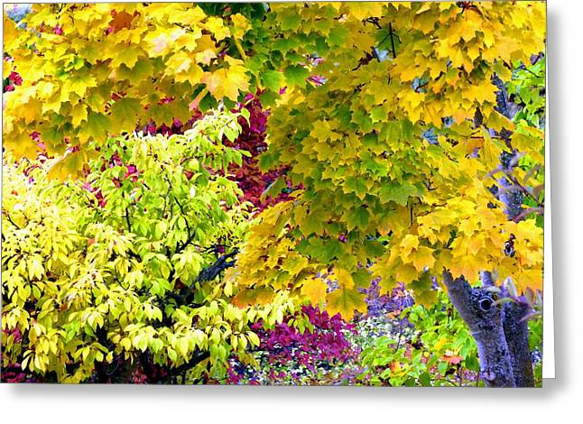 Trappings Of Autumn Greeting Card