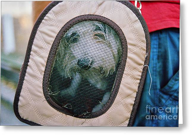 Greeting Card featuring the photograph Travel Dog by Dean Harte