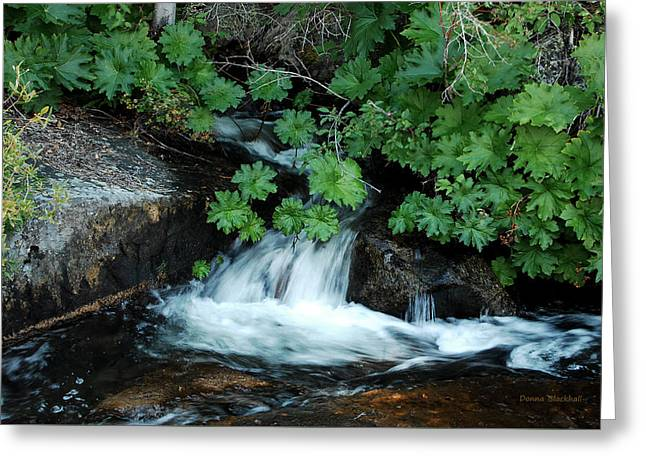 Traveling Downstream Greeting Card