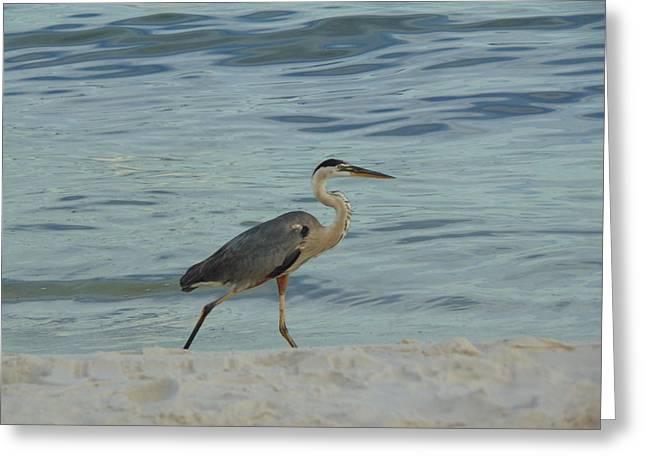 Ocean Wanderer Greeting Card