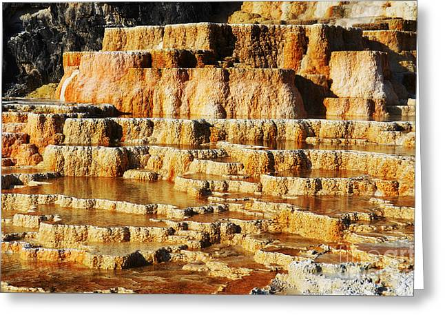 Travertine Hot Spring Terraces Orange Red Mammoth Hot Springs Yellowstone Np Wy Greeting Card by Shawn O'Brien