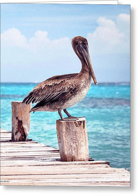 Treasure Coast Pelican Pier Seascape C1 Greeting Card by Ricardos Creations
