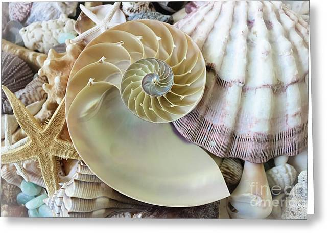 Treasures From The Sea Greeting Card