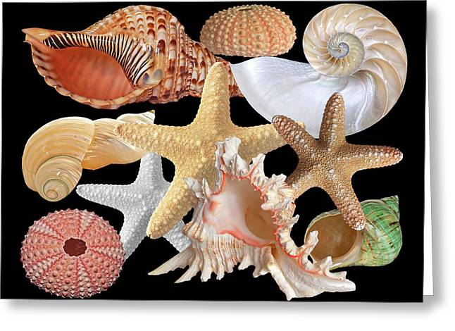Treasures Of The Deep On Black Greeting Card by Gill Billington