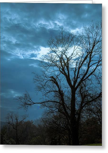 Tree # 23 Greeting Card