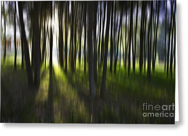 Tree Abstract Greeting Card by Avalon Fine Art Photography