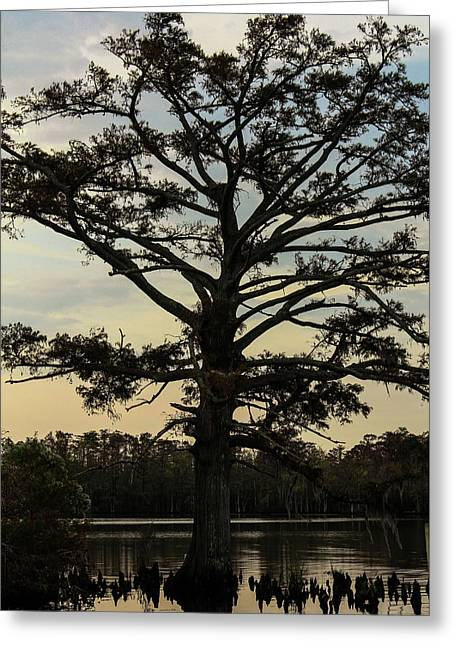 Tree Against The Sky Greeting Card by Carolyn Ricks