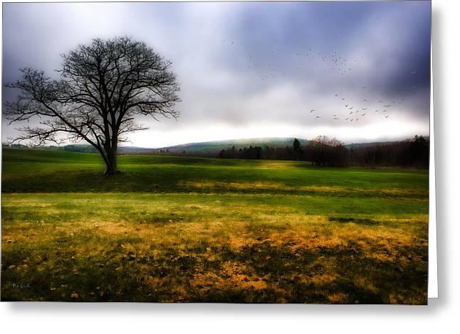 Tree Alone Greeting Card by Bob Orsillo