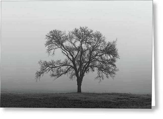 Greeting Card featuring the photograph Tree Alone In The Fog by Todd Aaron