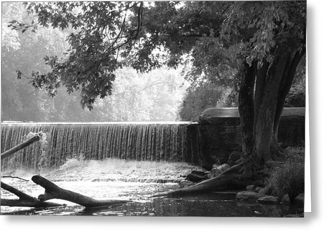Tree And Dam Greeting Card by Michael L Kimble