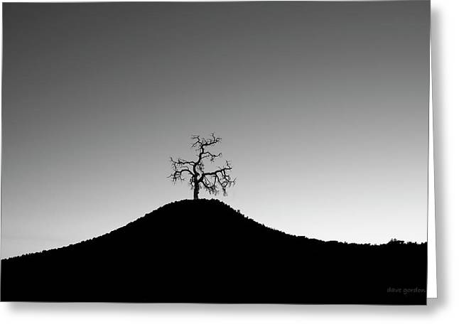 Tree And Hill Bw Greeting Card by David Gordon