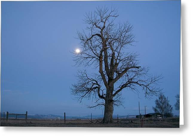 Tree And Moon Greeting Card