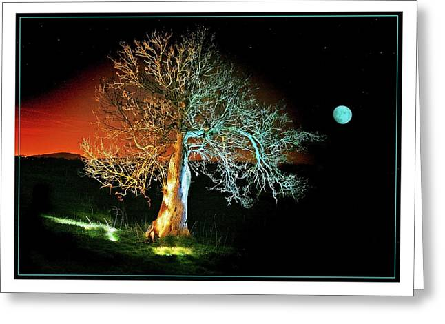 Moonlit Night Greeting Cards - Tree and Moon Greeting Card by Mal Bray