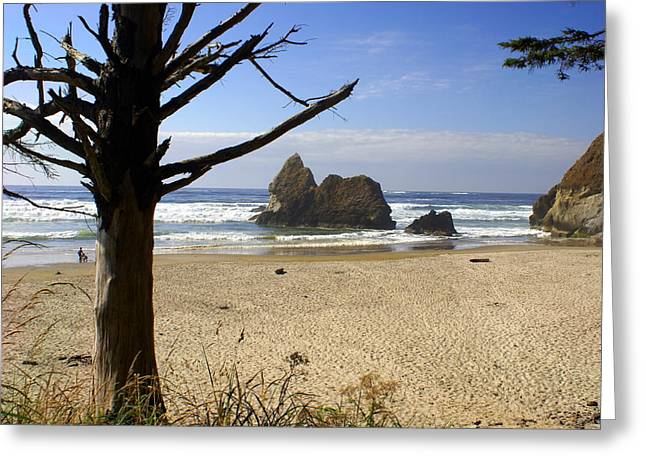 Tree And Ocean Greeting Card by Marty Koch