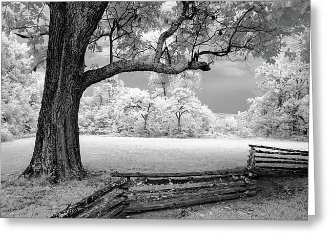 Tree And Split Rail Fence Greeting Card